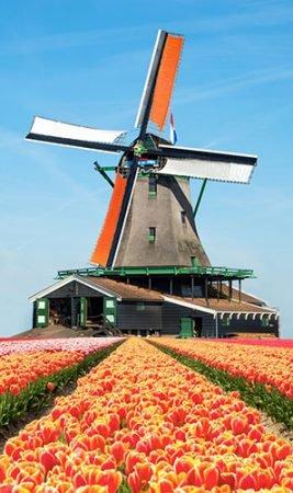 Du học đến Hà Lan